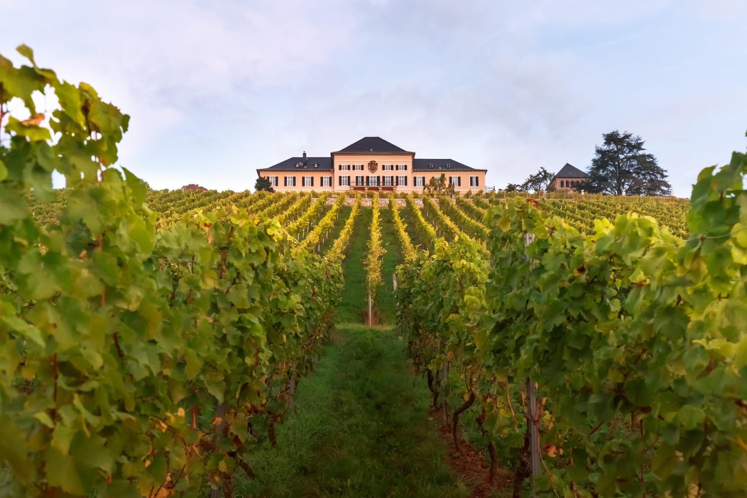 Vignoble Schloss Johannisberg
