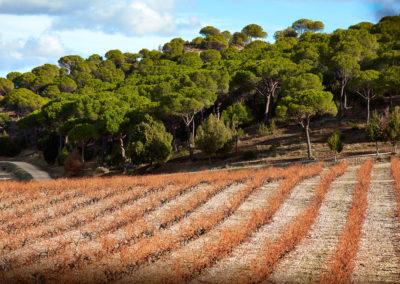 Tempos Vega Sicilia - Alión